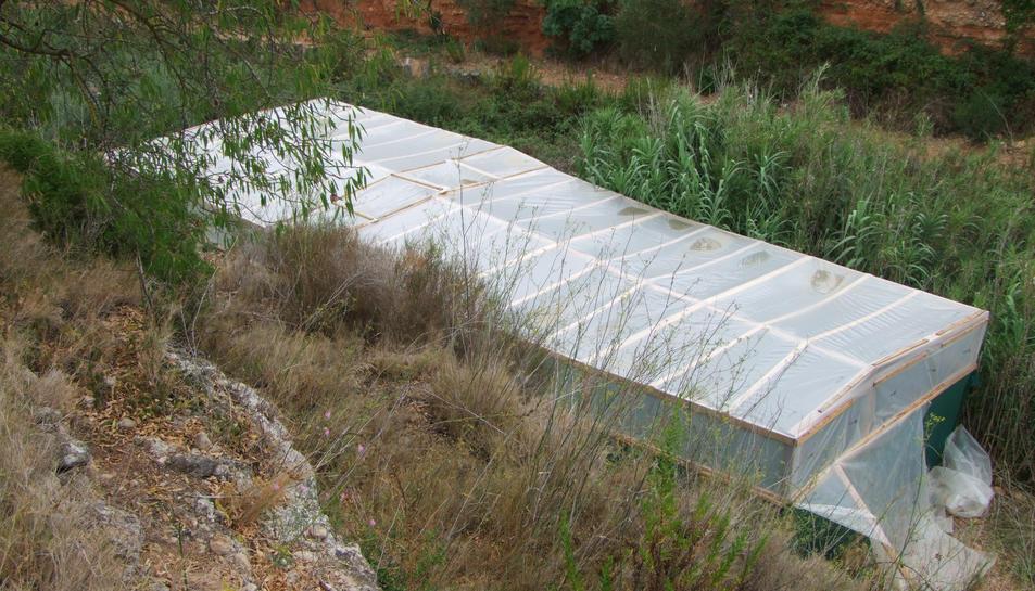 L'hivernacle on es cultivava la marihuana estava situat enmig d'un camp d'oliveres.