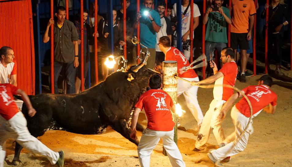Imatge d'un bou embolat a Sant Jaume d'Enveja