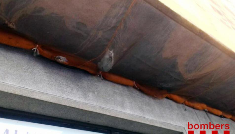 El gat ha quedat sota del balcó del primer pis, a la xarxa protectora.
