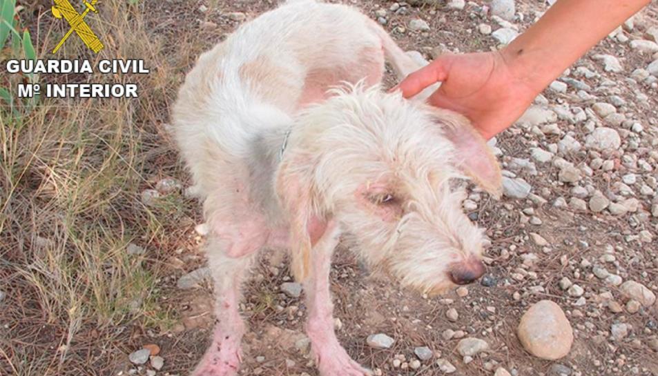 Imatge d'un dels animals en mal estat.