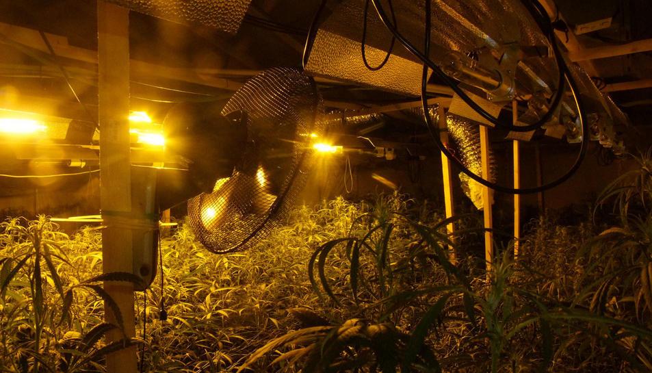 Pla general de la plantació de marihuana, amb la instal·lació de llum i ventilació per conrear-la a l'interior.