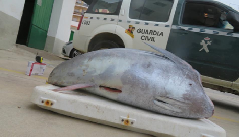 Imatge d'una de les peces capturades.