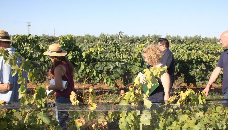 Les vinyes de Mas Valero, durant un tast de varietats minoritàries.
