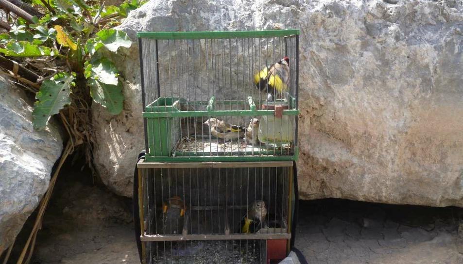 Imatge dels ocells intervinguts.