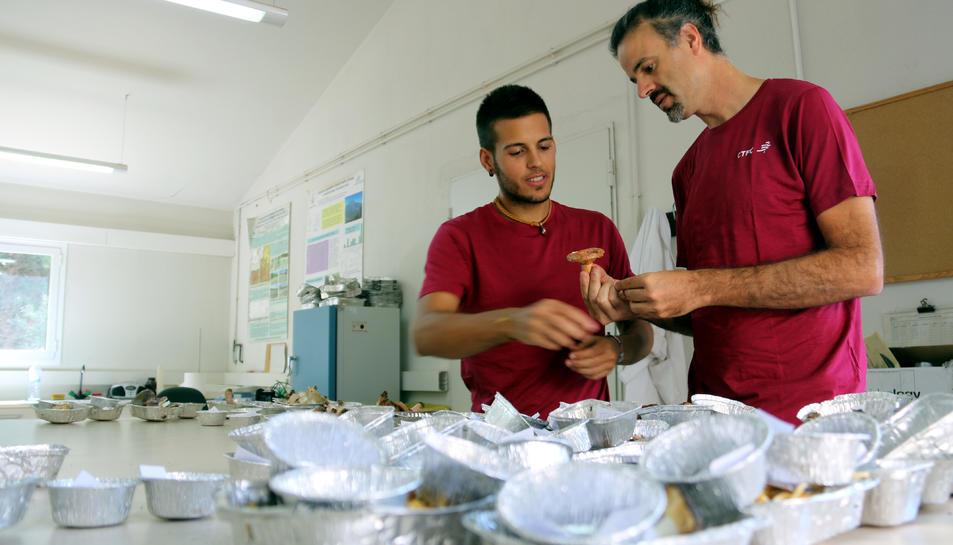 Experts del CTFC treballen amb bolets al laboratori del Centre Tecnològic Forestal de Catalunya.