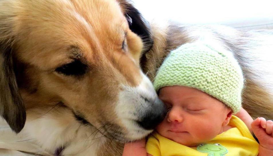 Imatge d'un gos i un nadó.