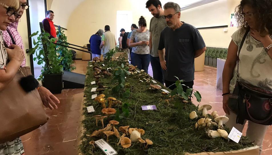 L'exposició de bolets de l'any passat, a l'interior de l'Ajuntament del Morell.