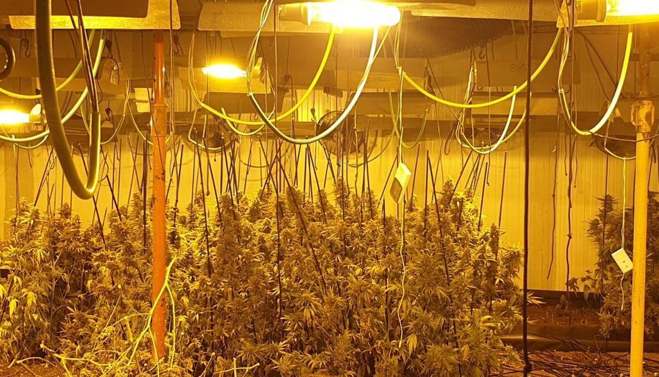 Pla general de la plantació de marihuana intervinguda per la Guàrdia Urbana de Barcelona.