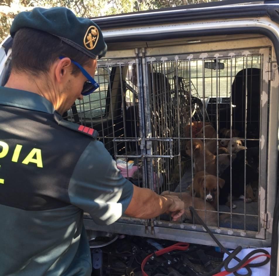 Els gossos rescatats per la Guàrdia Civil