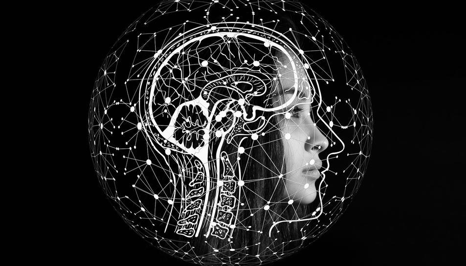 Han identificat un mecanisme que podria ajudar a explicar com el cervell genera records episòdics