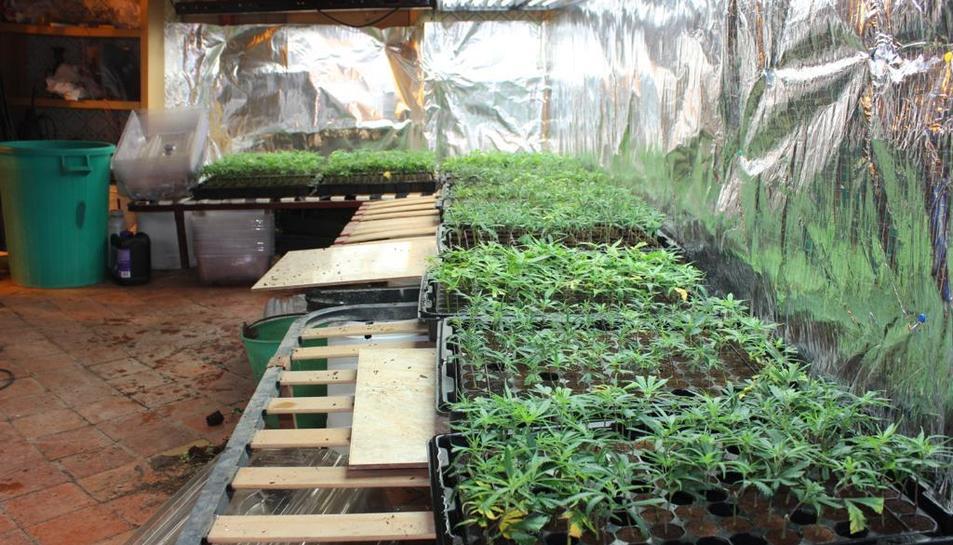 La policia va trobar milers de plantes en creixement preparades per a vendre's a cultivadors.