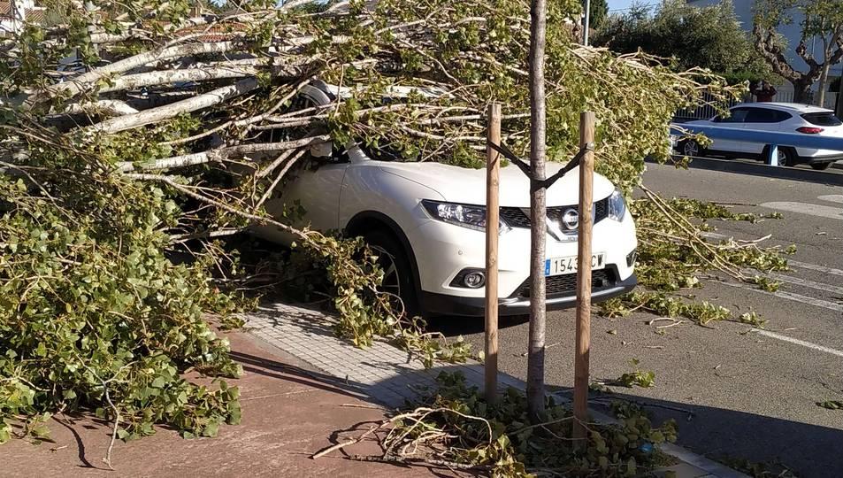 Un vehicle afectat per la caiguda d'un arbre a Cambrils.