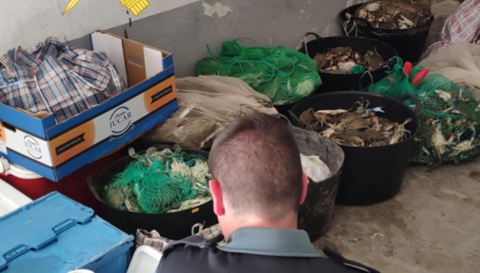 Imatge dels crancs blaus intervinguts per la Guàrdia Civil