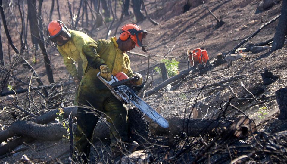 Imatge de dos operaris treballant en la construcció de feixines a la zona de l'incendi de Ribera d'Ebre