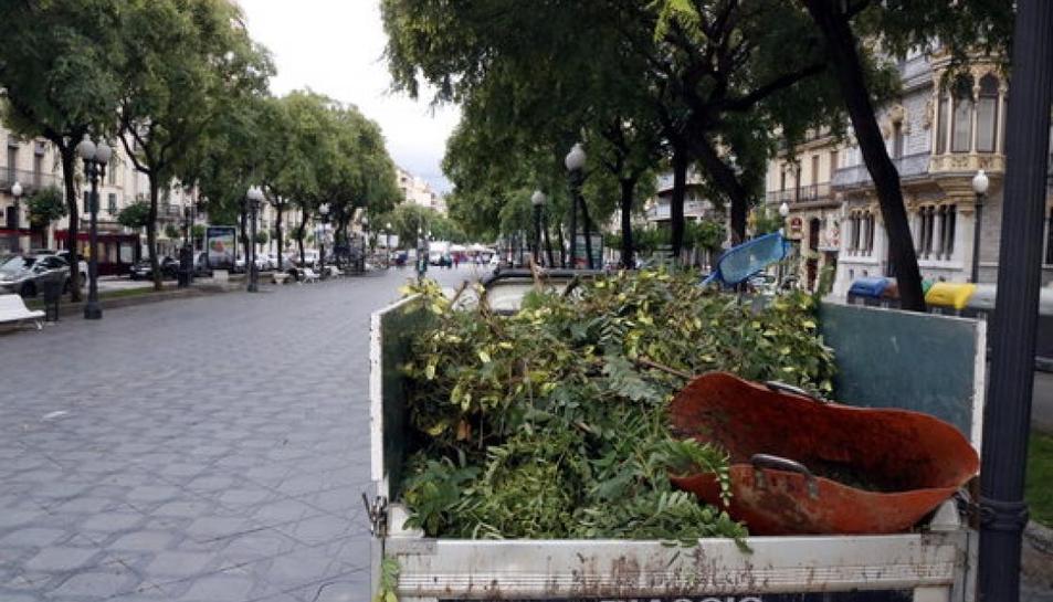 Imatge de la poda a la Rambla de Tarragona