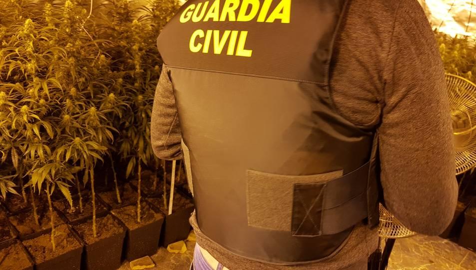 Imatge de la Guardia Civil a la plantació de Rodonyà