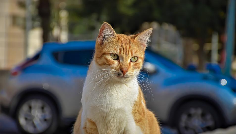 Imatge d'un gat al carrer.