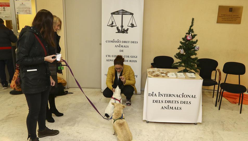 Punt d'informació i assessoració animalista ahir als Jutjats
