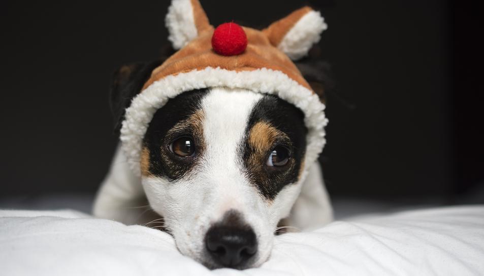 Imatge d'un gos amb un barret de Nadal.
