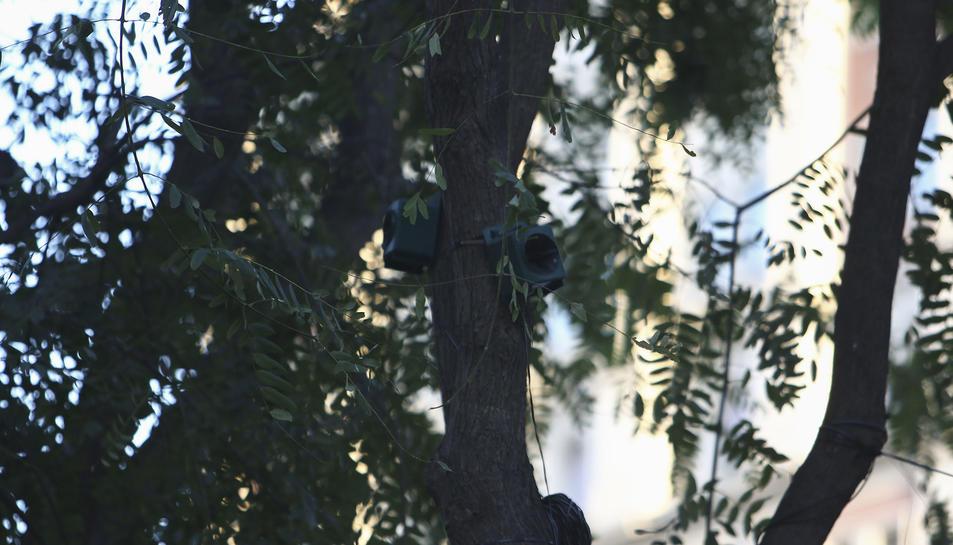 Els dispositius estan a les copes dels arbres i emeten sorolls enregistrats de forma natural.