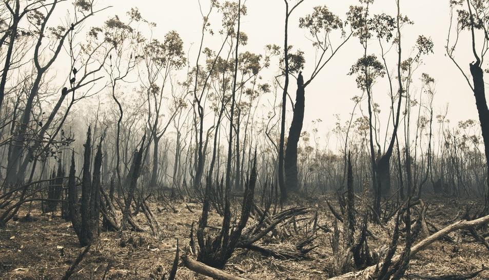 Australia, afectada por una oleada de grandes incendios