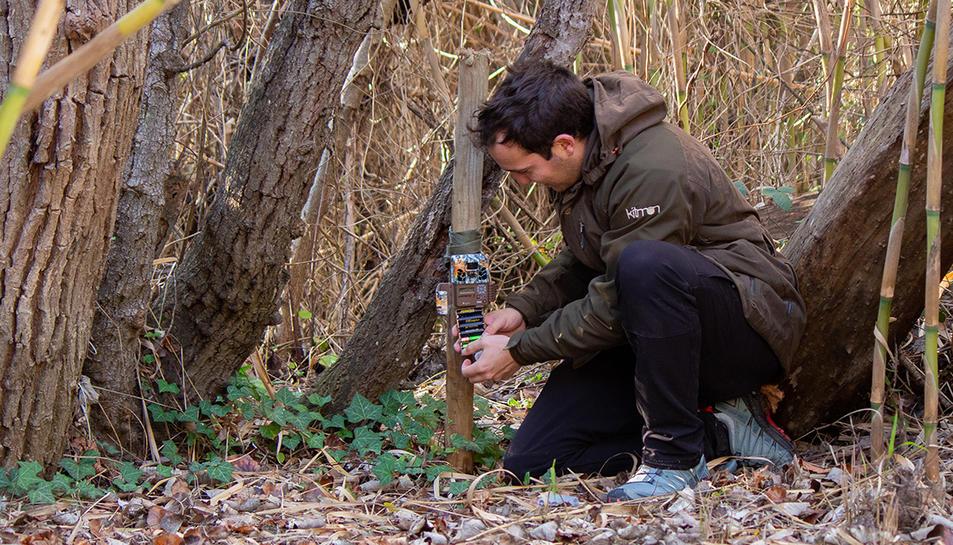 Instal·lació d'una de les càmeres de seguiment dels mamífers a la zona.