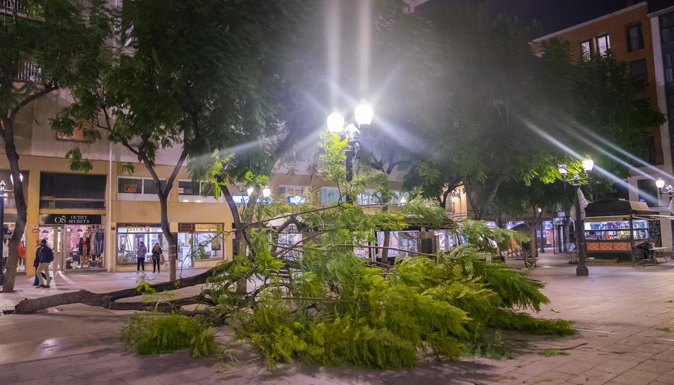 Un arbre caigut a la plaça Verdaguer de Tarragona.