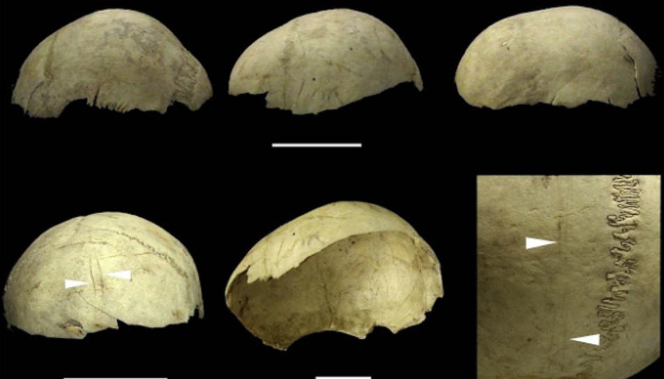 Cranis copa procedents de la Cueva del Mirador a Atapuerca, Burgos - Palmira Saladié/IPHES