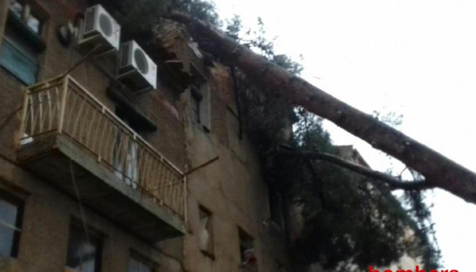 Un arbre ha caigut a sobre d'un sostre d'un edifici al Molar.