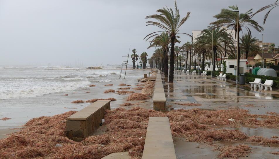 Restes de vegetació que ha expulsat el mar i que han embrutat part del passeig marítim de Cunit.