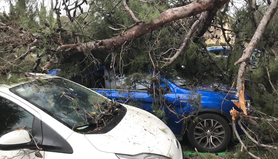 Un arbre caigut al Camp de Mart a Tarragona.