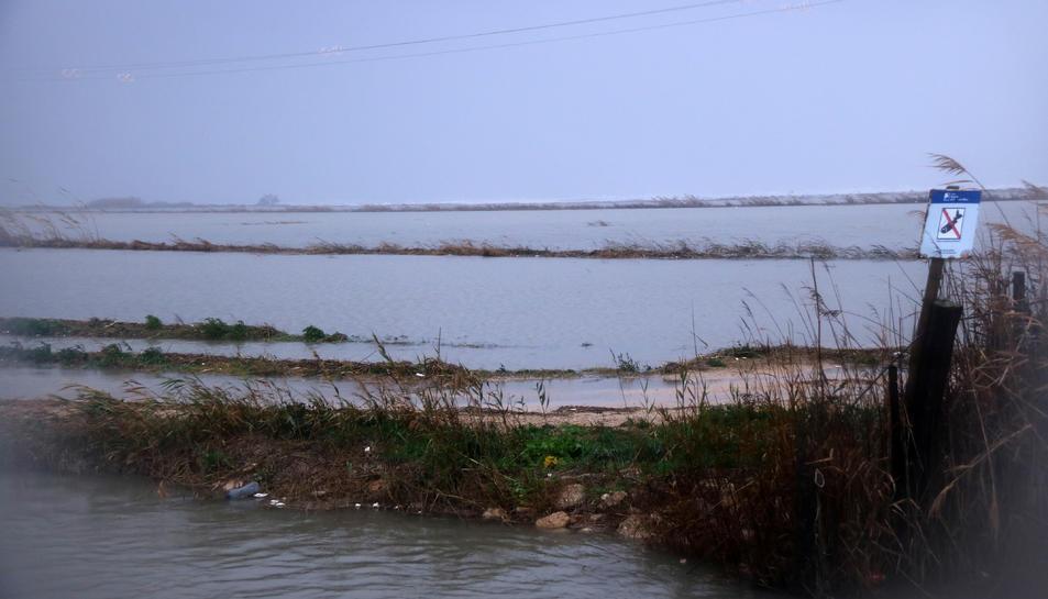 Pla general de camps d'arròs afectats per la inundació marítima del temporal Glòria a la zona de la Marquesa, al delta de l'Ebre.