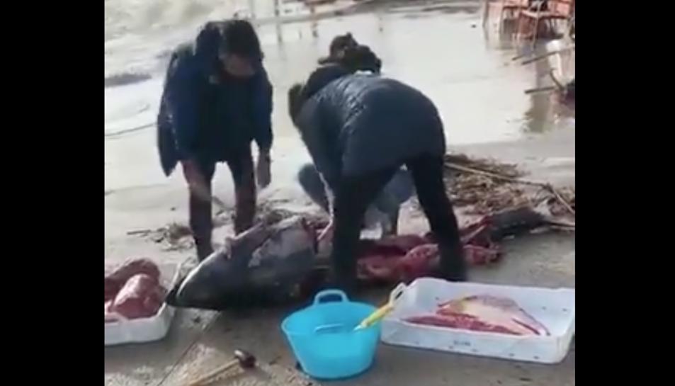 Imatge d'alguns veïns tallant la carn d'una tonyina de grans dimensions.