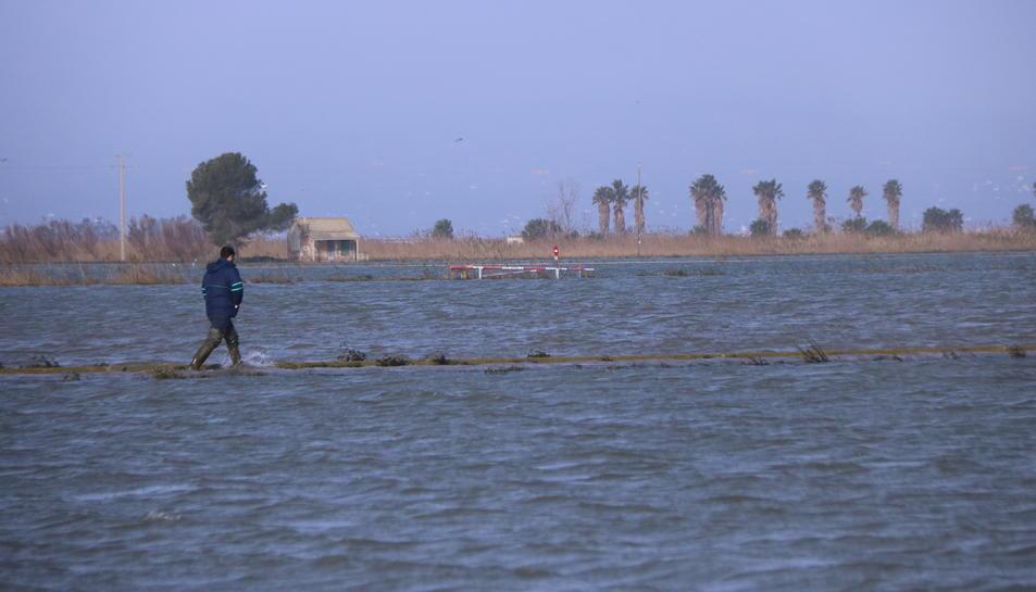 Arrossaires comproven l'aigua del mar que ha entrat als arrossars de la bassa de l'Arena del delta de l'Ebre.