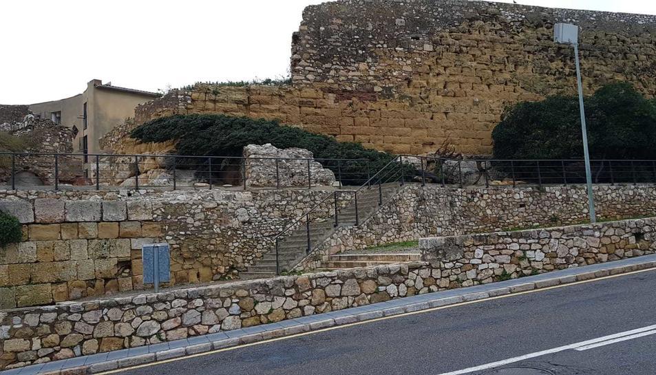 Un xiprer caigut davant la murall de Tarragona.