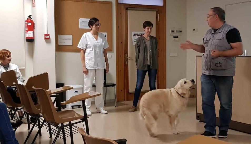 Pla general d'una sessió de teràpia amb gossos, anomenada canoteràpia.