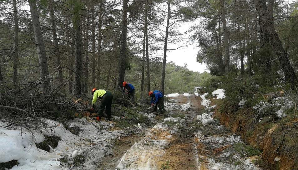 Més d'una desena d'efectius treballen per alliberar els accessos, afectats per caiguda d'arbres i esllavissades.