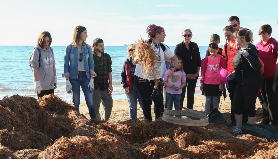 La corretjola és una planta del fons marí i «és aliment d'altres plantes i l'estructura a partir de la qual neix la duna», segons Guerra.