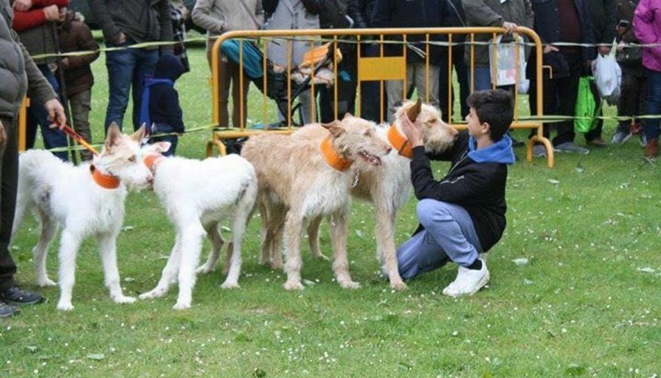 Imatge de diversos gossos de caça.