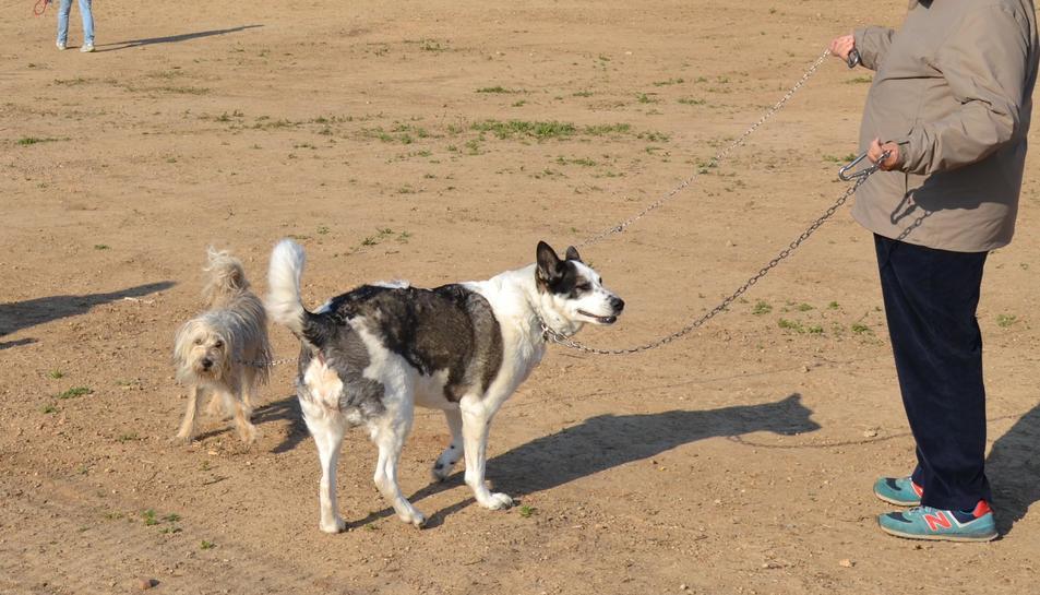 Imatge d'una de les zones d'esbarjo per a gossos de Reus.