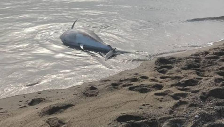 Imatge d'una tonyina de grans dimensions que ha aparegut a Miami Platja.