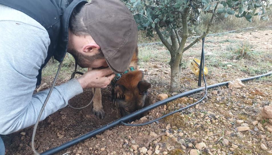 Juan Magaña i el seu gos Ken treballant una tòfona.