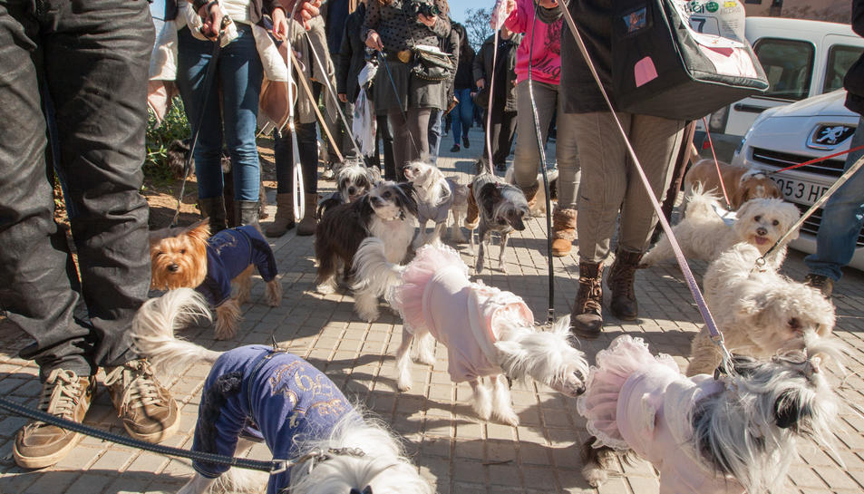 Resultado de imagen para el amor por los perros transforma san valentín