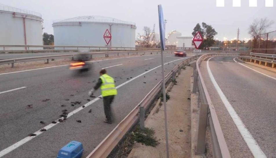 Agents Rurals recollint exemplars de la carretera, el passat diumenge.