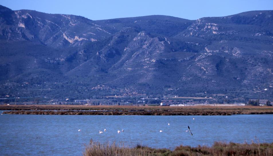Pla general de flamencs a la llacuna de l'Encanyissada, al delta de l'Ebre.
