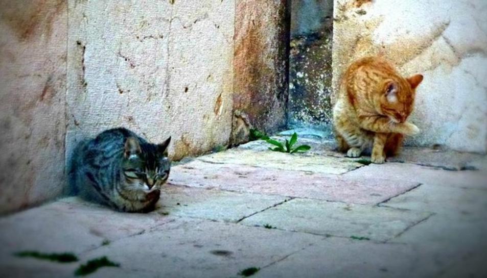 Imatge de dos gats ferals d'una de les moltes colònies que viuen a la ciutat de Tarragona