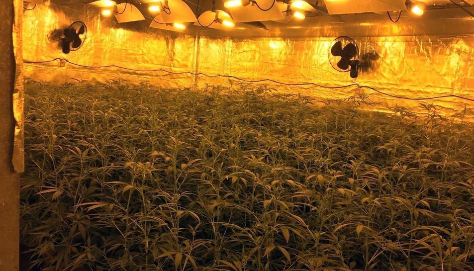 Aspecte que oferia la nau on hi havia la plantació de marihuana.
