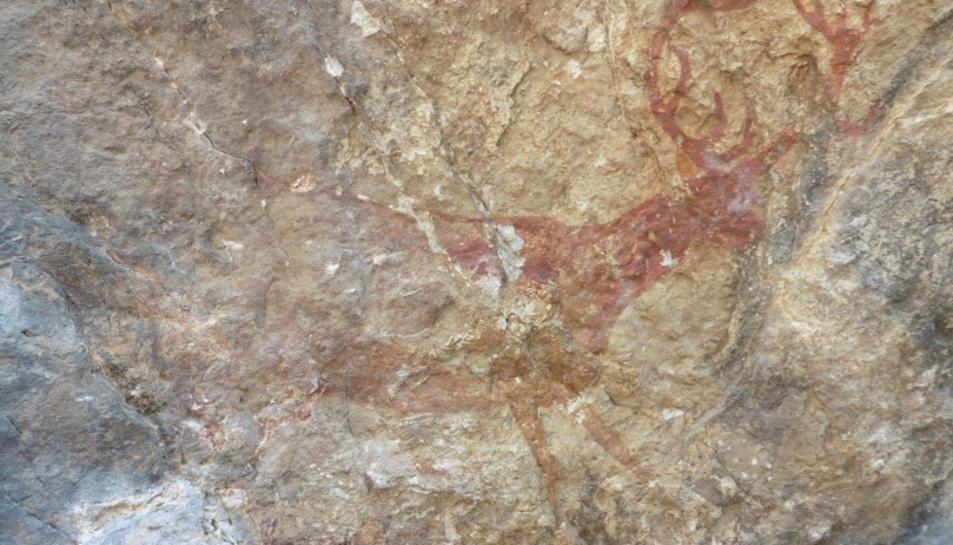 Imatge del crvol que es conserva a la Cova