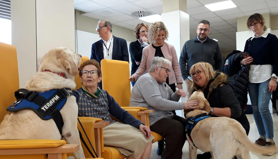 Pla general de pacients amb els gossos del tractament terapèutic que s'ha incorporat.