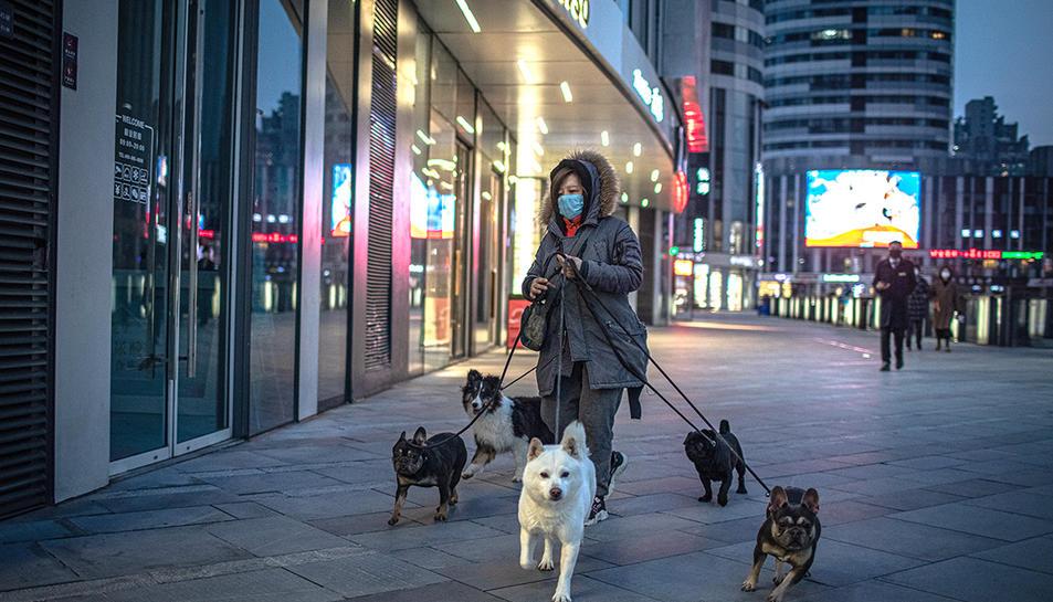 Una dona amb mascareta passejant gossos a la ciutat de Beijing, a la Xina.
